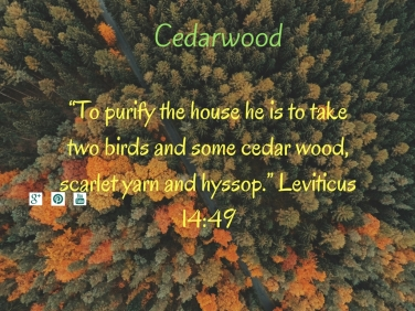 cedarwood-1