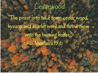 cedarwood-2
