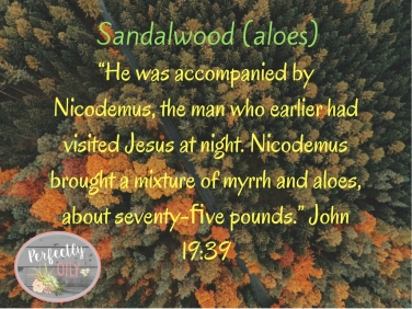 sandalwood-1